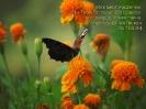 Как многочисленны дела Твои, Господи!